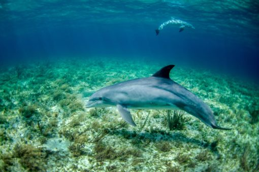 dolphin in body of water