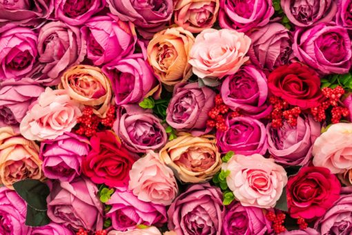 pink and yellow roses in close up photography