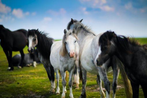herd of horses standing on grass